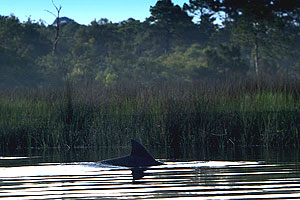 Timucuan Trail Waterway Guide
